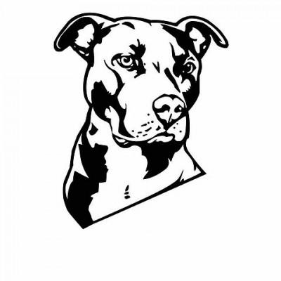 чёрно-белые картинки собак