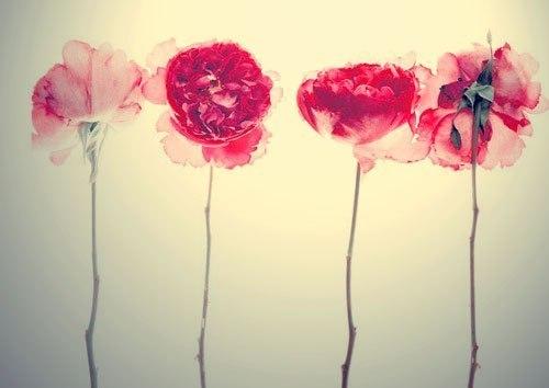 Цветной эскиз татушки цветы мака