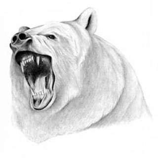 медведь в профиль рисунок