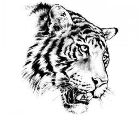 Эскиз тату в виде головы тигра