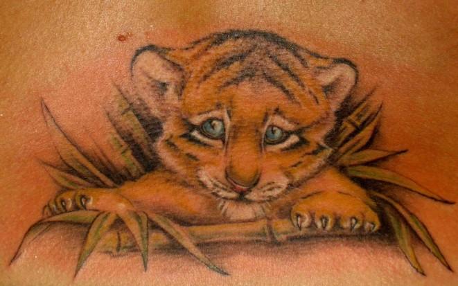 фото кошки тигра