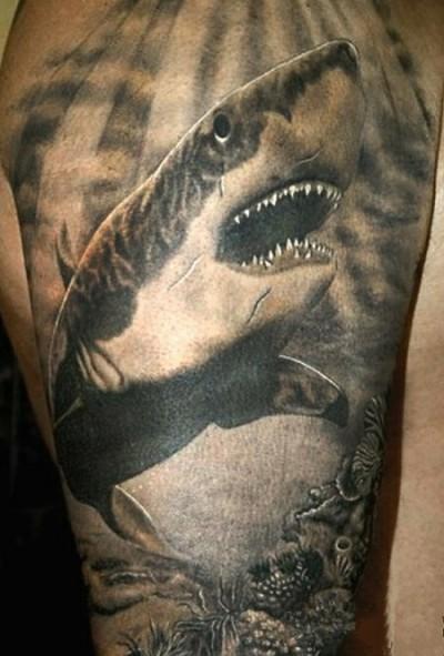 Тату у парня на плече акула